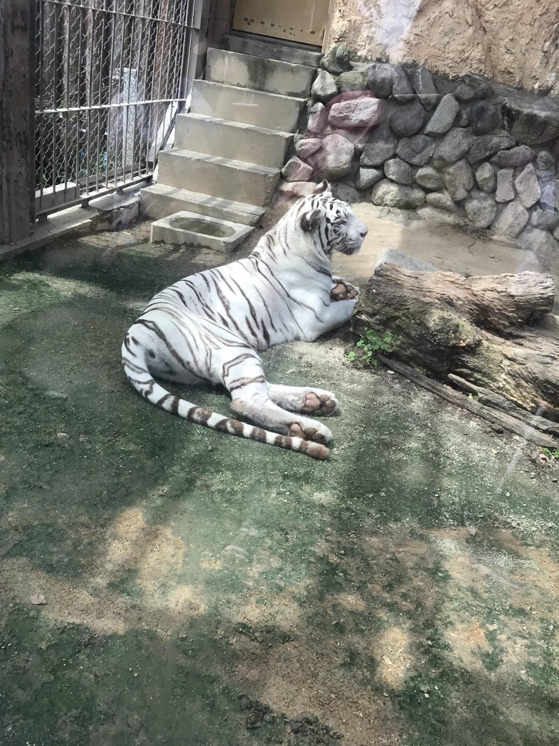 ☆9月3日(日曜日)東武動物公園_170906_0115
